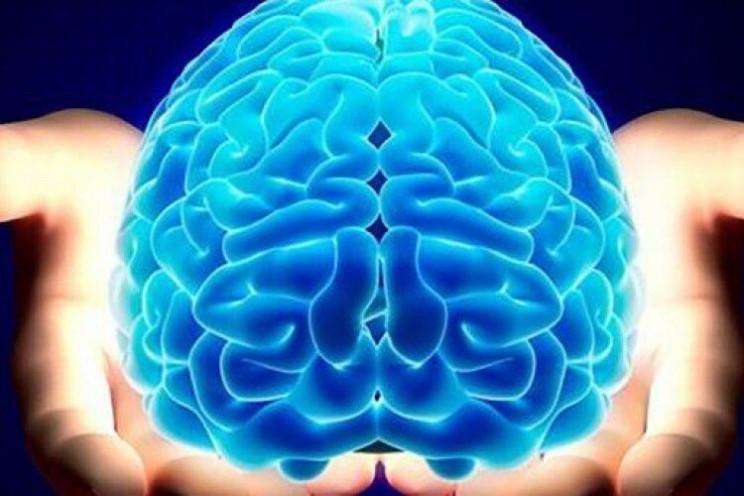 Вчені розповіли, коли мозок людини досяг…