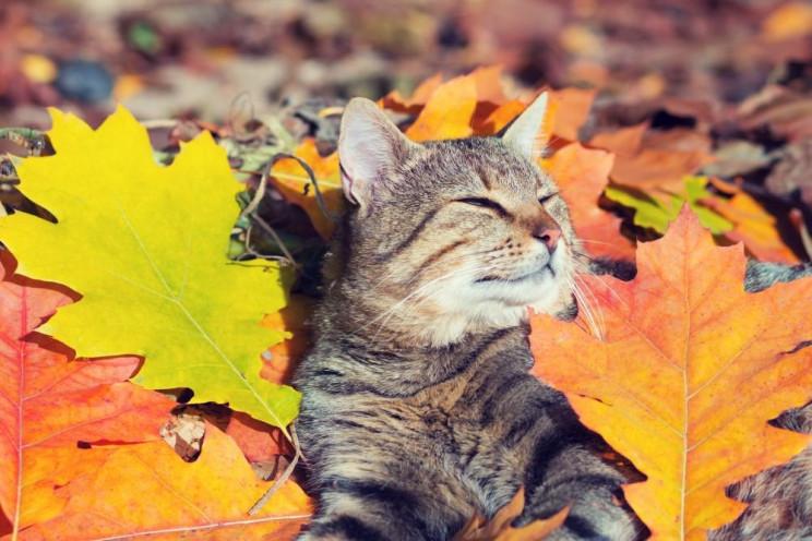 Погода на Херсонщине на 23 октября: Ночь…
