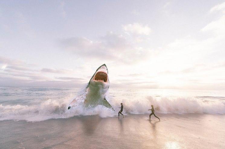 У Єгипті акула напала на українців: Дити…