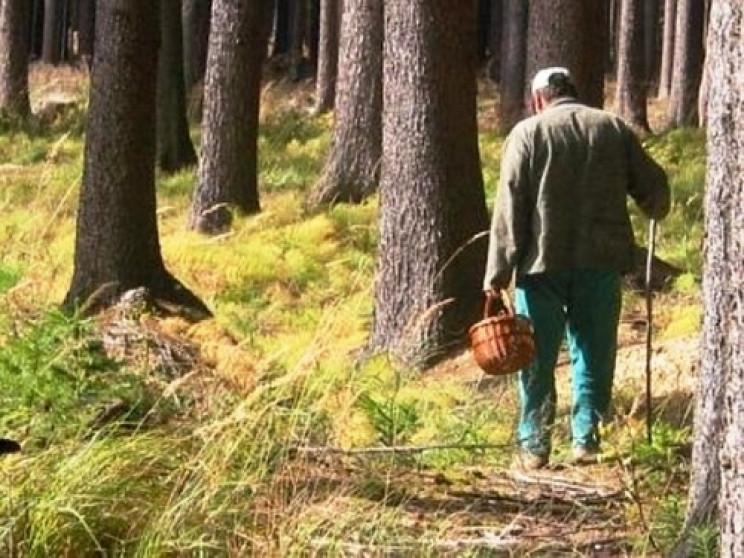 На Хустщині розшукують зниклого грибаря…