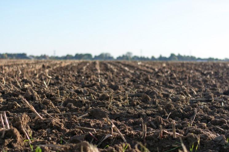 У херсонского фермера отобрали девять ге…