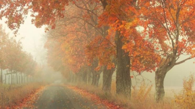 Погода в Херсоні та області на 29 жовтня…