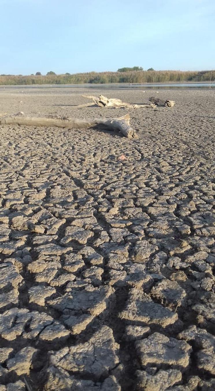 Екологічна біда - у області висох ставок