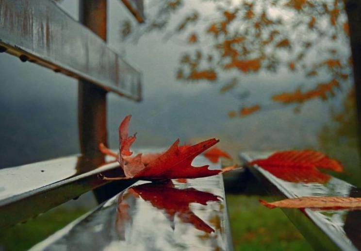 На Днепропетровщине ожидают тепло, дожди…