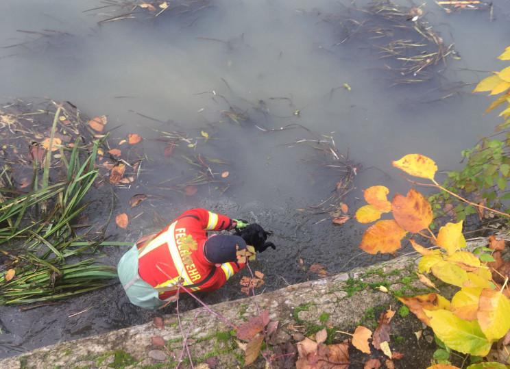 У Хусті рятували собаку: Пес влаштував к…