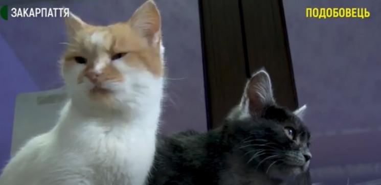 На Міжгірщині близько сотні котів знайшл…