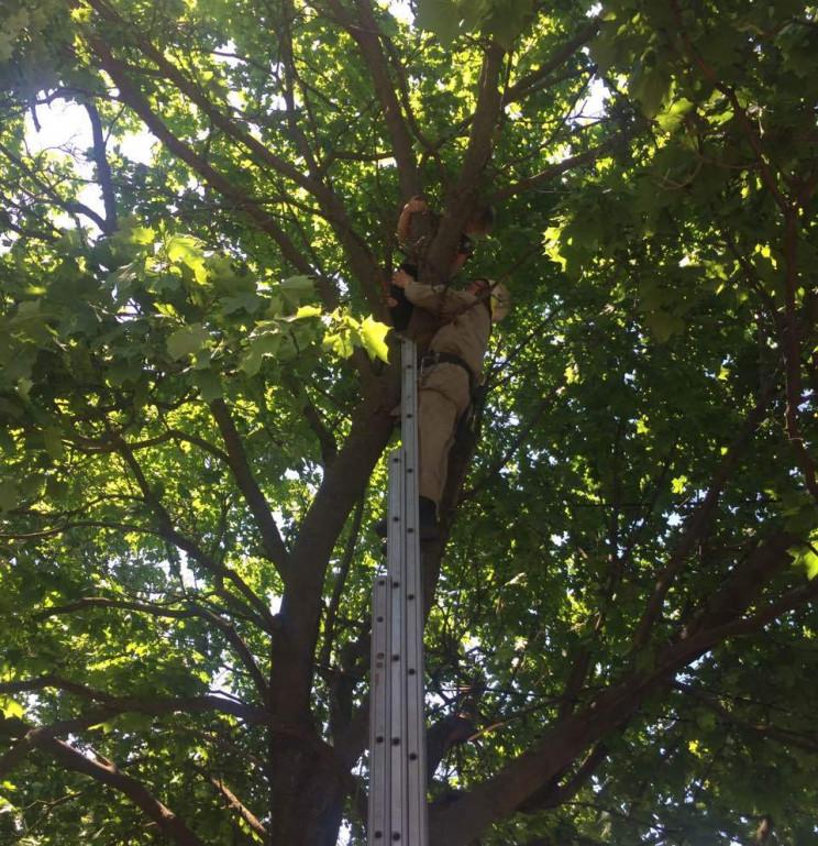 У Калуші рятувальники знімали з дерева 10-річну дитину