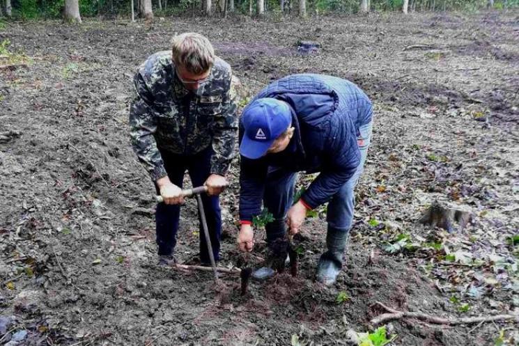 Кам'янецький лісгосп відновив майже 50 г…
