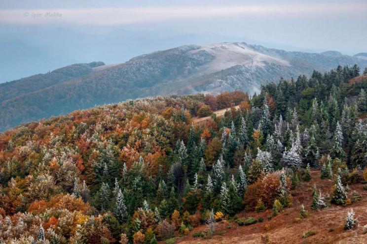 Европа хочет украинский лес: Почему сего…