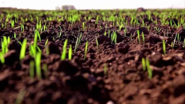 Тепла весна: На Запоріжжі вже сіють…