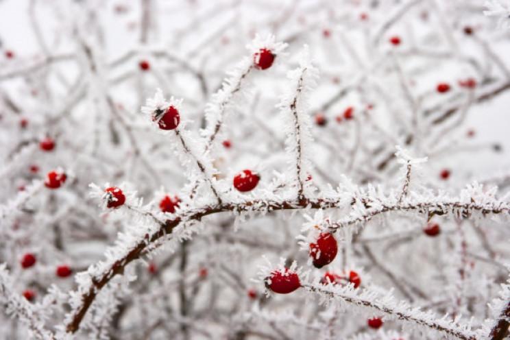 Погода на середу: У Вінниці буде морозн…