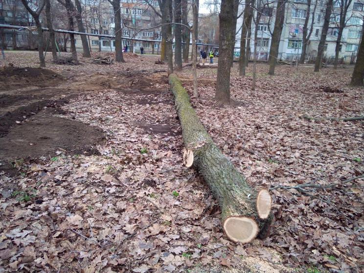У Миколаєві у сквері рублять чудо-дуби з…