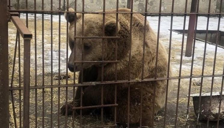 Пополнение в хмельницком зооуголке: Медв…