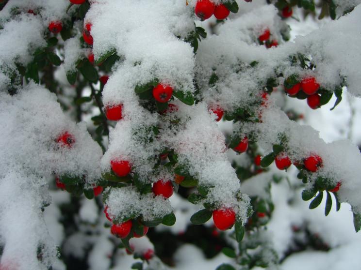 """Як у Дніпрі виглядає """"зимовий"""" ботанічни…"""