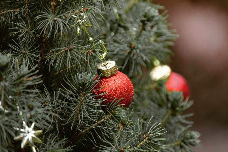 На Сумщині новорічні ялинки перероблятим…