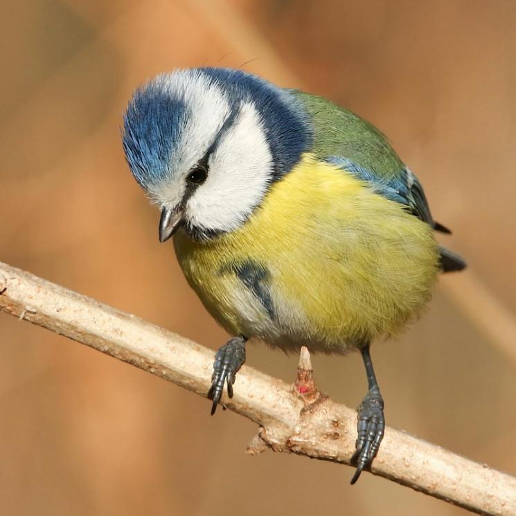 Як у Дніпрі пташки через місяць розлуки…