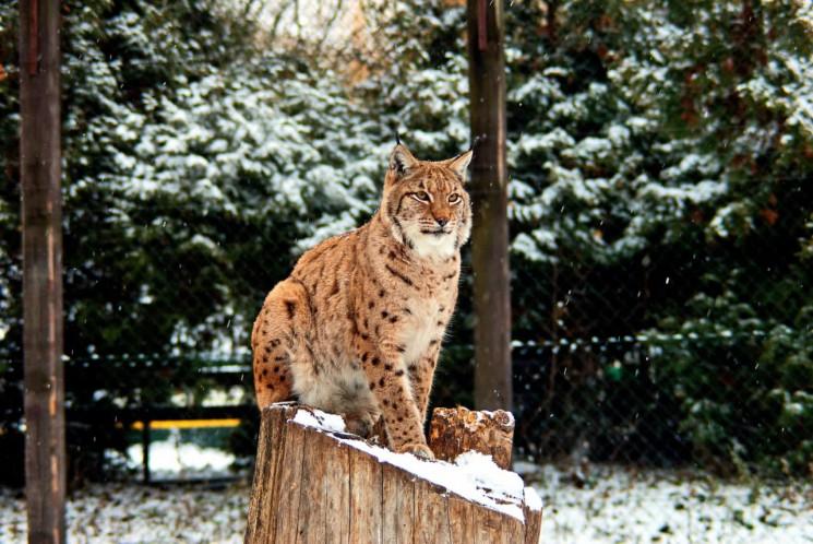 Київський зоопарк здешевив квитки на час…