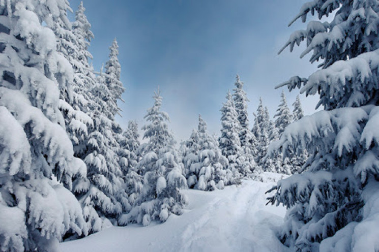 Закарпаття: Прогноз погоди на 14 січня –…