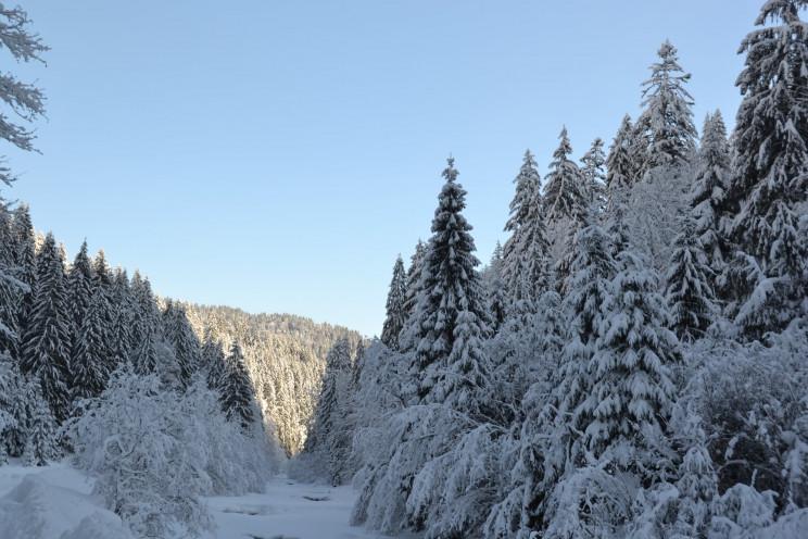 """Зимові пейзажі: Нацпарк """"Синевир"""" вкрило…"""