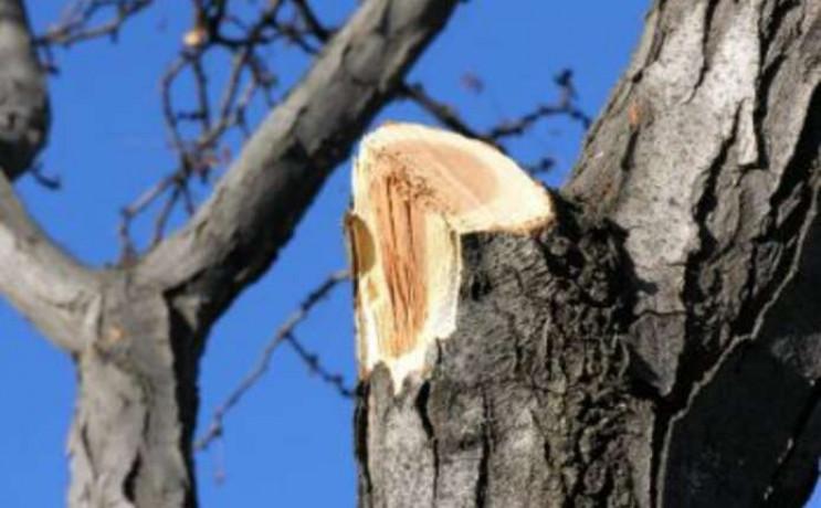На Тернопільщині під час обрізки дерев з…
