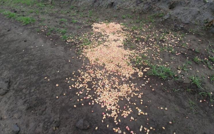 Загибель червонокнижних птахів: Херсонсь…