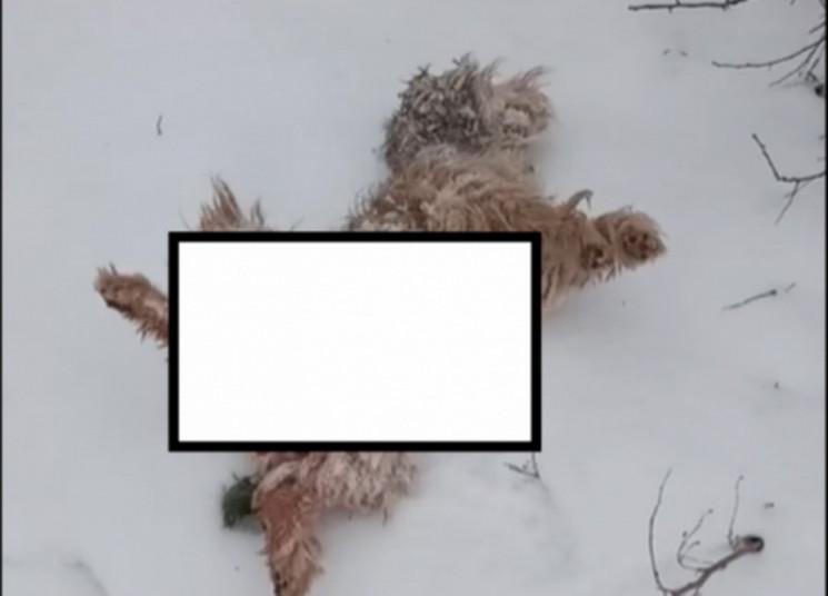 В Запорожской области неизвестный хищник…
