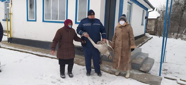 В Винницкой области спасли лебедя: Оправ…
