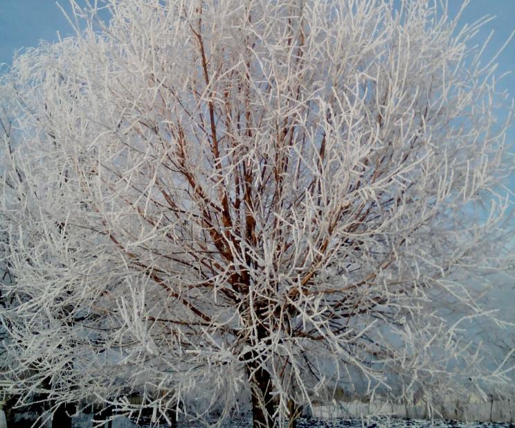 Погода на п'ятницю: Мороз у Вінниці буде…