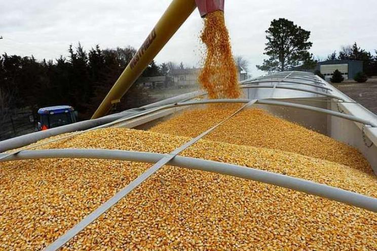 В экспорте зерна Украина уступает только…