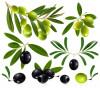 в'ялені оливки — зображення інгредієнта