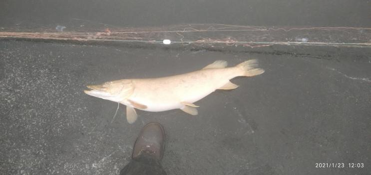 На Дніпропетровщині риба заплуталась у б…