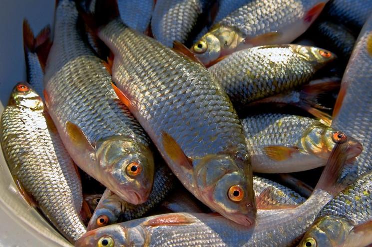 Майже 50 тис. грн штрафу отримало рибопе…