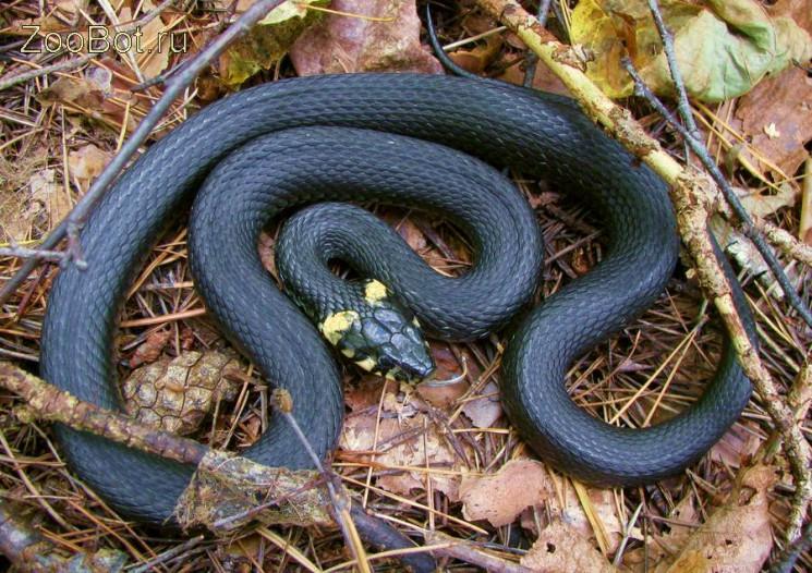 Как не стать жертвой змеи…
