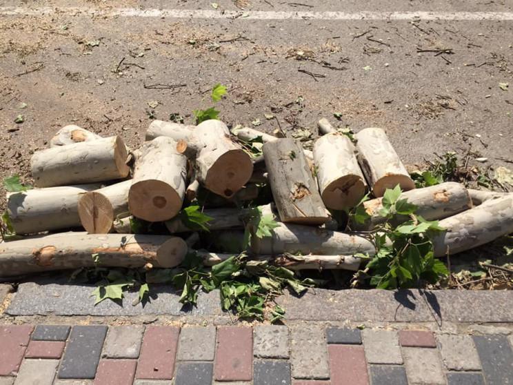 У Дніпрі планують знищити сотні дерев за…