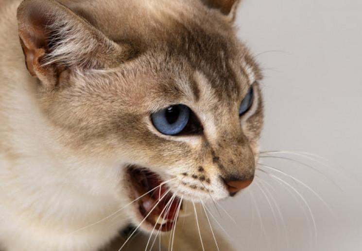 Від скаженої кішки в Одеському порту пос…