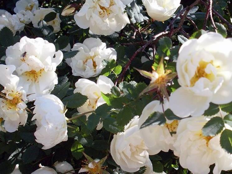 Прикмети 6 червня: Чому у день Семена тр…