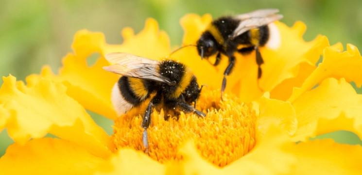 Пчеловоды Херсонщины будут пользоваться…