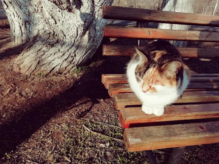 Березневі коти повилазили на вулиці Одес…