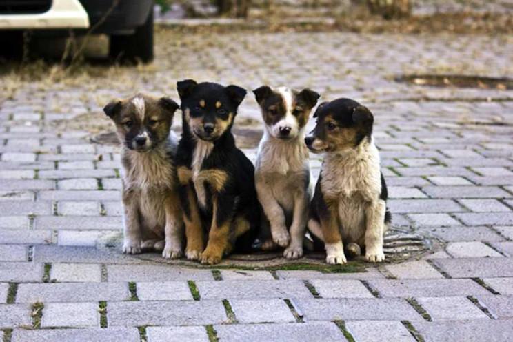 У Мукачеві на захист тварин витратять ма…