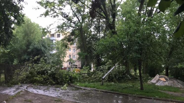 Як у Львові починалася буря (ВІДЕО)…