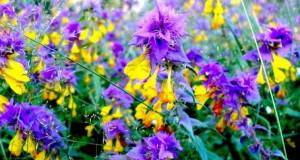 Сегодня праздник: Какой цветок, кроме па…
