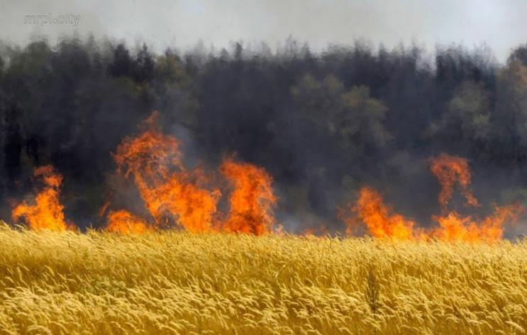 На Харківщині вогонь знищив 15 гектарів…