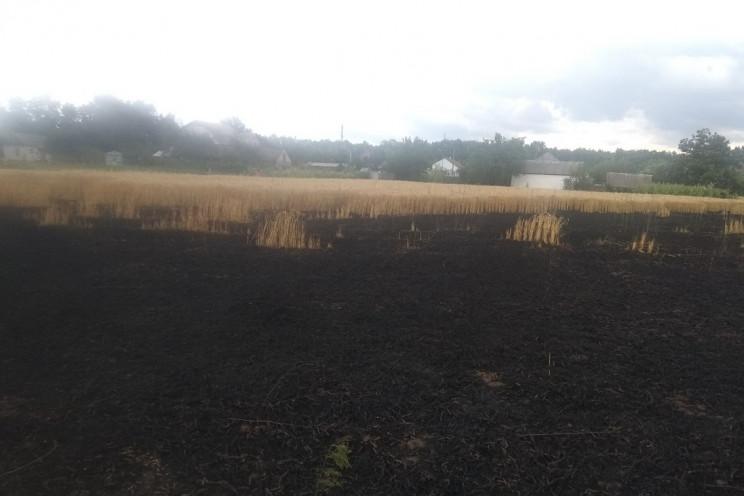 На Харківщині спалахнуло приватне пшенич…