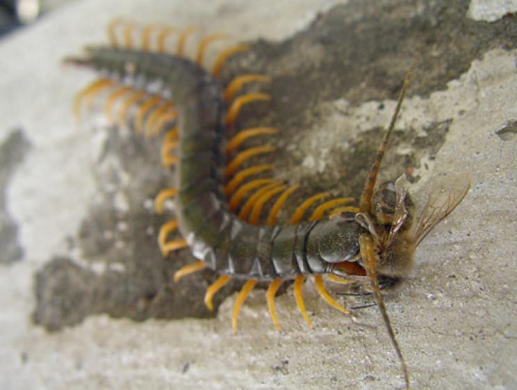 Один из районов Херсонщины атакуют ядовитые тропические насекомые: для детей их укус может быть смертельным