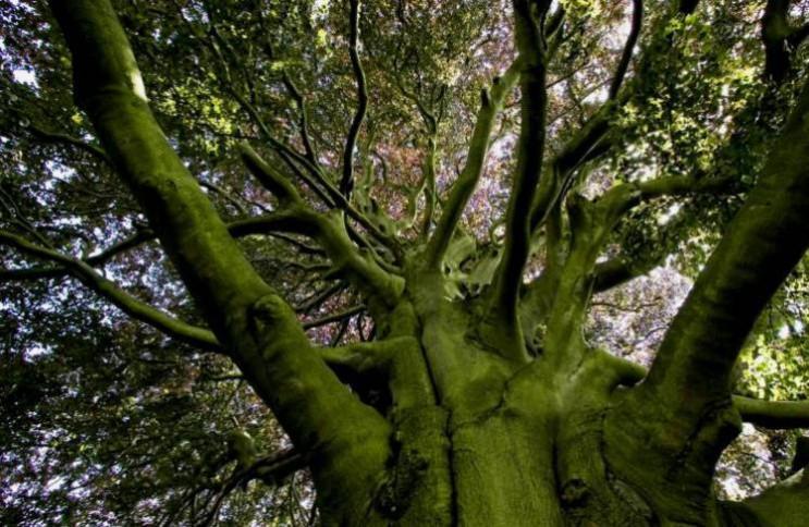 Почему 15 июля обнимаются с деревьями, н…