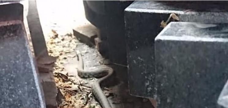 У Вінниці полюють на змію, яка оселилася…
