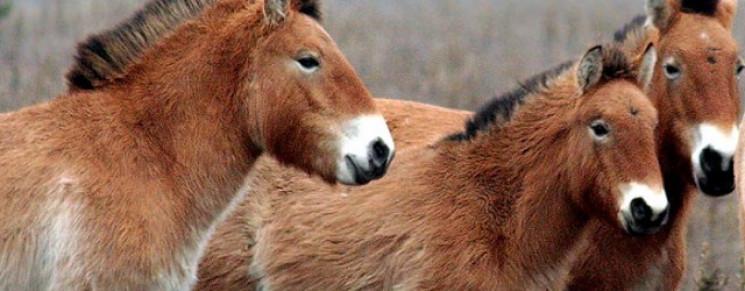 Киевский зоопарк начал наблюдение за лош…