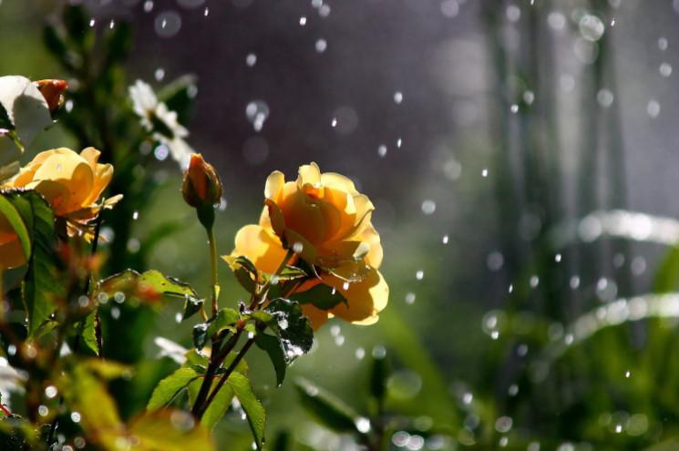 Що погода готує сумчанам перед дощовим п…