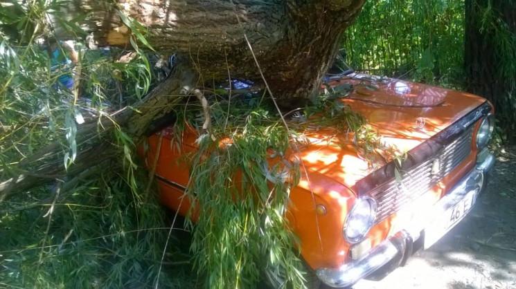 На Миколаївщині дерево впало на припарко…