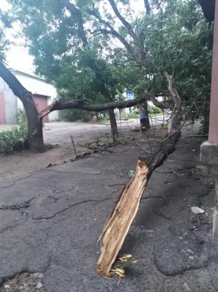 У Миколаєві штормовий вітер ламає дерева…